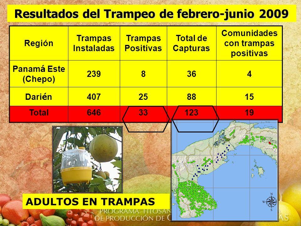 Región Trampas Instaladas Trampas Positivas Total de Capturas Comunidades con trampas positivas Panam á Este (Chepo) 2398364 Dari é n 407258815 Total6