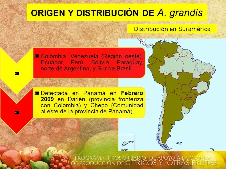 ORIGEN Y DISTRIBUCIÓN DE A. grandis Distribución en Suramérica Colombia, Venezuela (Región oeste), Ecuador, Perú, Bolivia, Paraguay, norte de Argentin