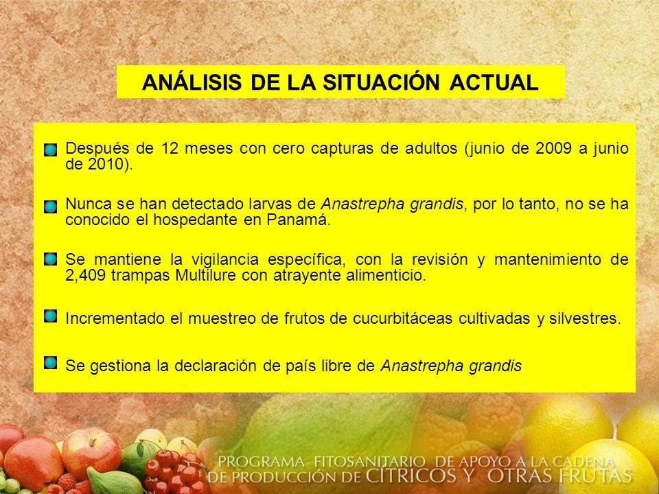 ANÁLISIS DE LA SITUACIÓN ACTUAL Después de 12 meses con cero capturas de adultos (junio de 2009 a junio de 2010). Nunca se han detectado larvas de Ana