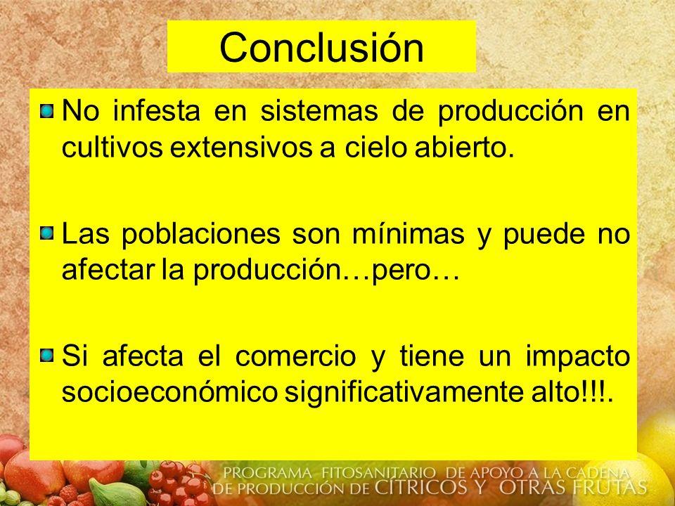 Conclusión No infesta en sistemas de producción en cultivos extensivos a cielo abierto. Las poblaciones son mínimas y puede no afectar la producción…p