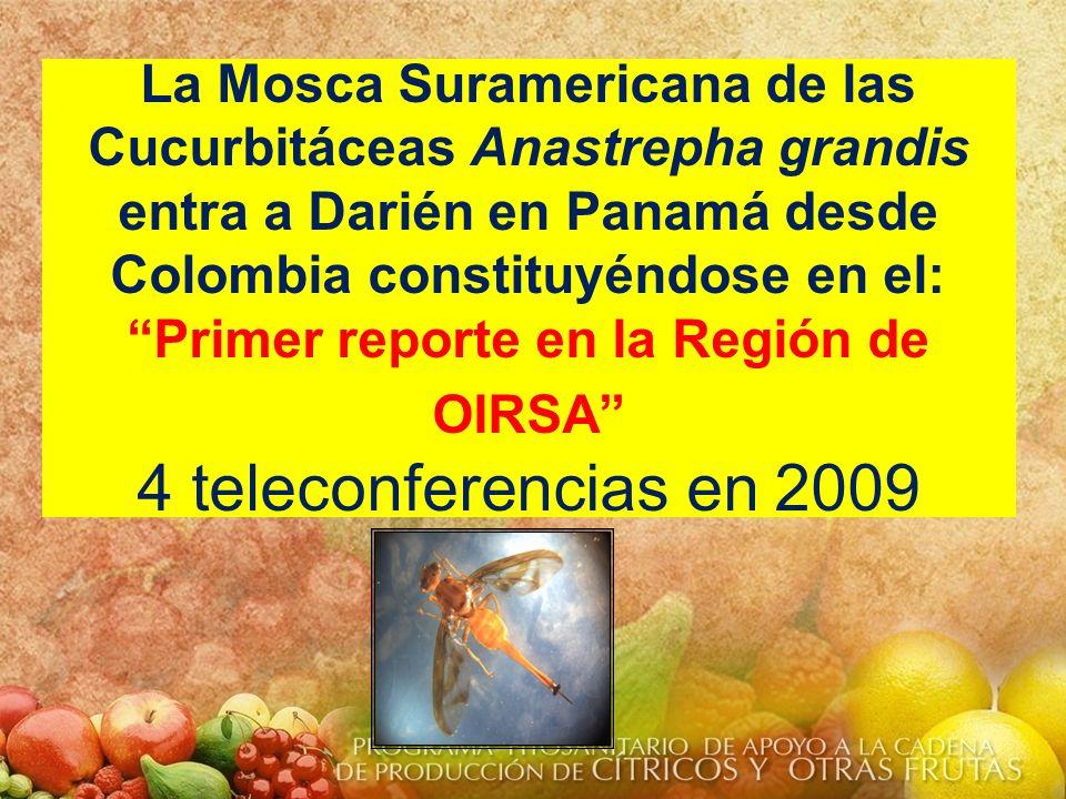 Ruta de la Mosca Suramericana Anastrepha grandis en Sur América.