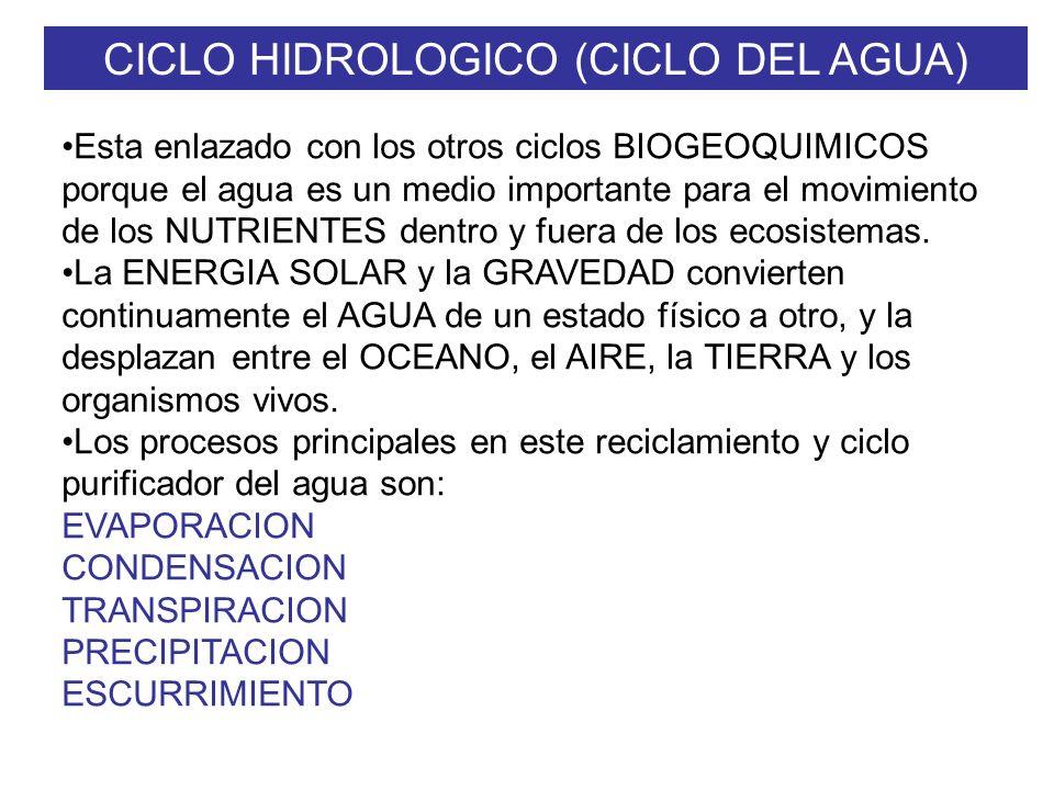 CICLO HIDROLOGICO (CICLO DEL AGUA) Esta enlazado con los otros ciclos BIOGEOQUIMICOS porque el agua es un medio importante para el movimiento de los NUTRIENTES dentro y fuera de los ecosistemas.