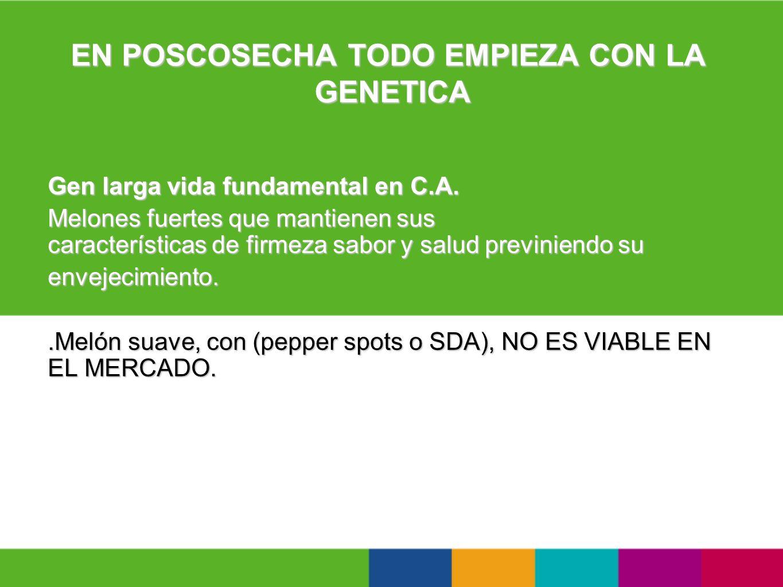 EN POSCOSECHA TODO EMPIEZA CON LA GENETICA Gen larga vida fundamental en C.A. Melones fuertes que mantienen sus características de firmeza sabor y sal