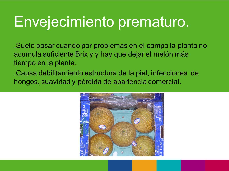 Envejecimiento prematuro..Suele pasar cuando por problemas en el campo la planta no acumula suficiente Brix y y hay que dejar el melón más tiempo en l