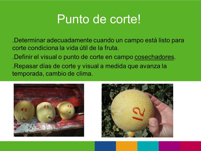 Punto de corte!.Determinar adecuadamente cuando un campo está listo para corte condiciona la vida útil de la fruta..Definir el visual o punto de corte
