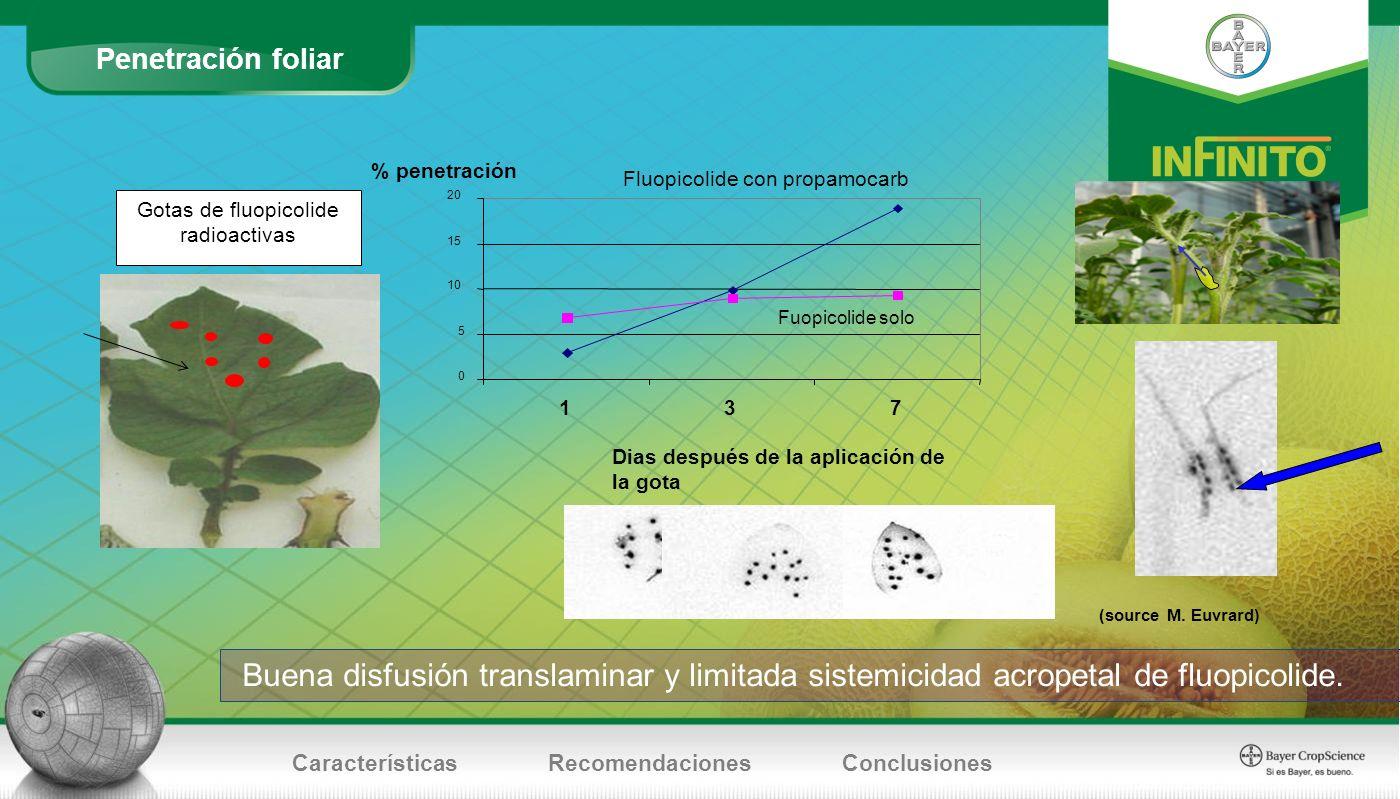 Penetración foliar CaracterísticasRecomendacionesConclusiones Fluopicolide con propamocarb 0 5 10 15 20 137 Dias después de la aplicación de la gota %