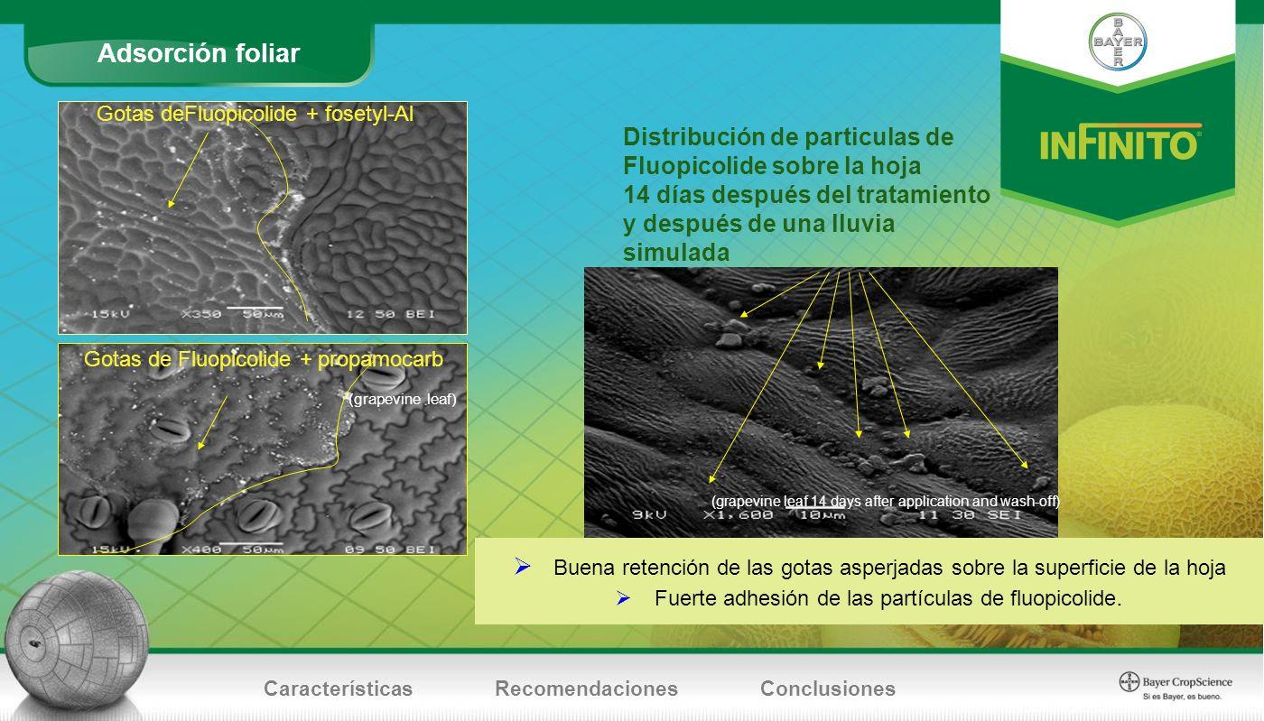 Adsorción foliar CaracterísticasRecomendacionesConclusiones Gotas de Fluopicolide + propamocarb (grapevine leaf) (grapevine leaf 14 days after applica