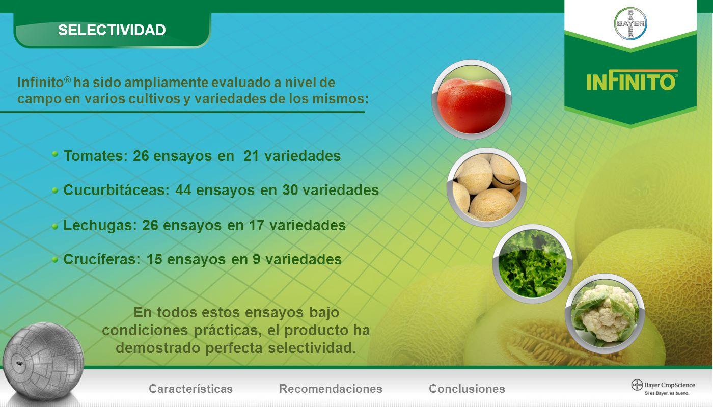 Infinito ® ha sido ampliamente evaluado a nivel de campo en varios cultivos y variedades de los mismos: En todos estos ensayos bajo condiciones prácti