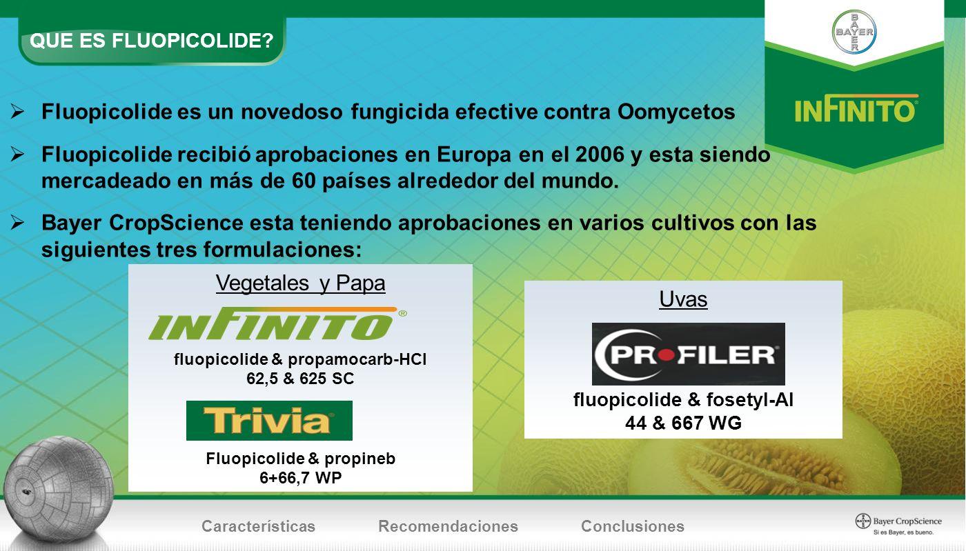 QUE ES FLUOPICOLIDE? CaracterísticasRecomendacionesConclusiones Fluopicolide es un novedoso fungicida efective contra Oomycetos Fluopicolide recibió a
