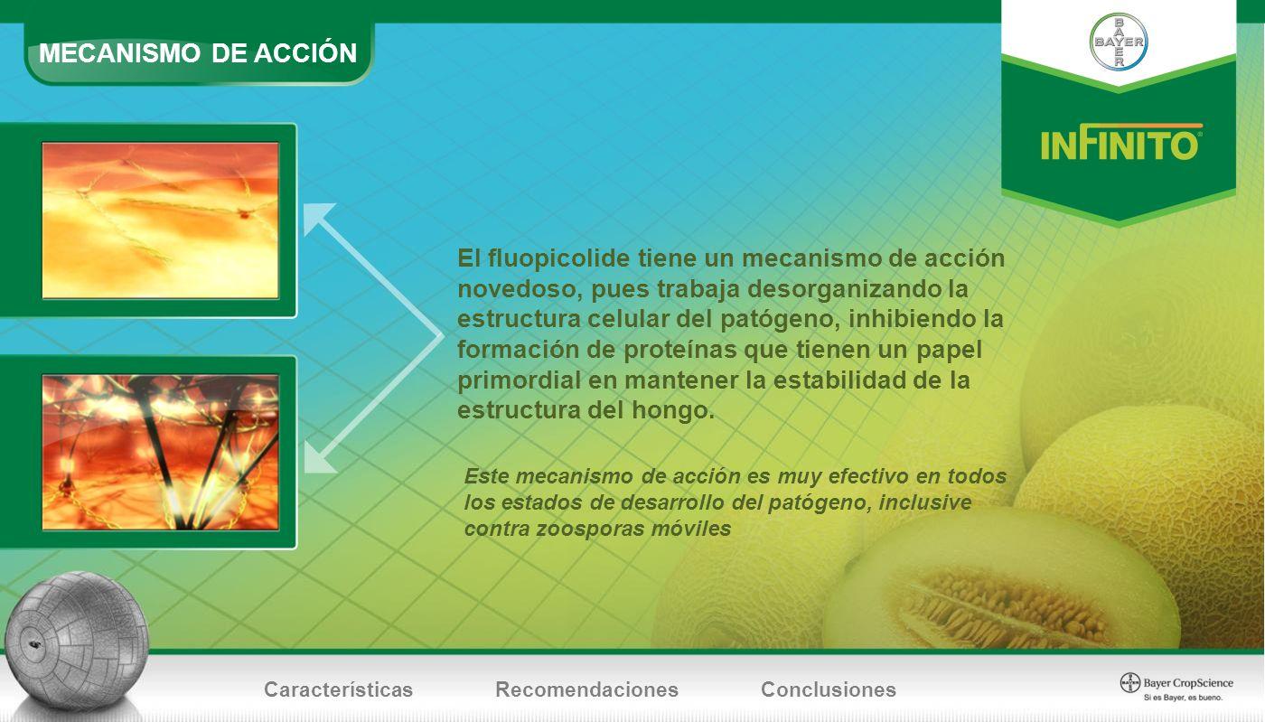 Este mecanismo de acción es muy efectivo en todos los estados de desarrollo del patógeno, inclusive contra zoosporas móviles El fluopicolide tiene un