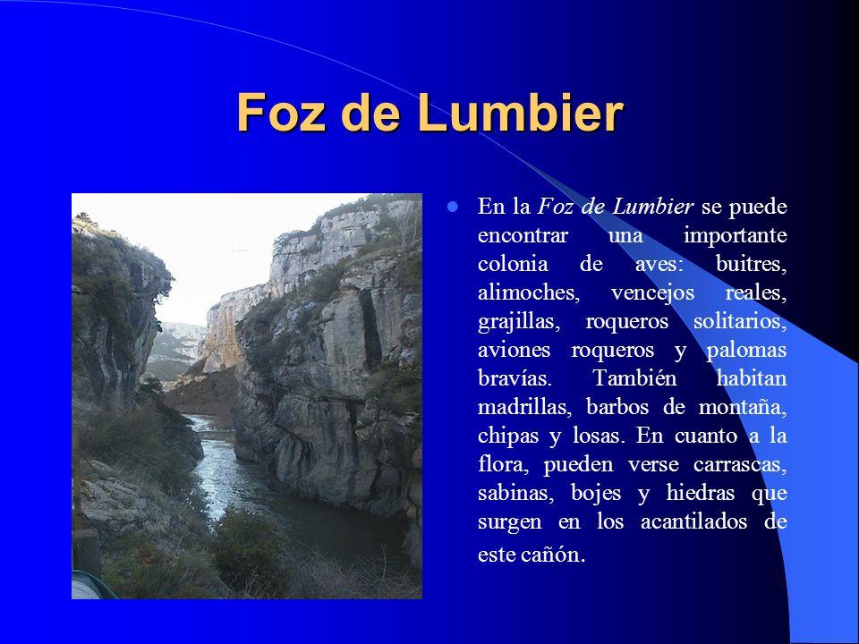 El paisaje Los acantilados de la Sierra de Leire y los bellos parajes que forman los ríos Irati y Salazar contribuyen a aumentar la belleza del lugar.