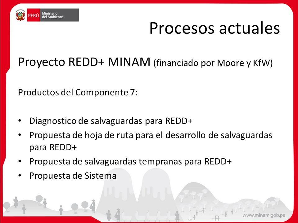 Procesos actuales Proyecto REDD+ MINAM (financiado por Moore y KfW) Productos del Componente 7: Diagnostico de salvaguardas para REDD+ Propuesta de ho
