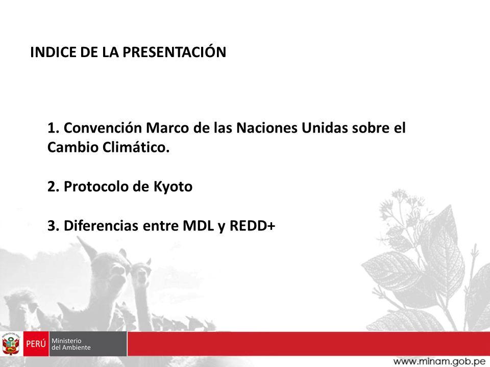 1. Convención Marco de las Naciones Unidas sobre el Cambio Climático. 2. Protocolo de Kyoto 3. Diferencias entre MDL y REDD+ INDICE DE LA PRESENTACIÓN