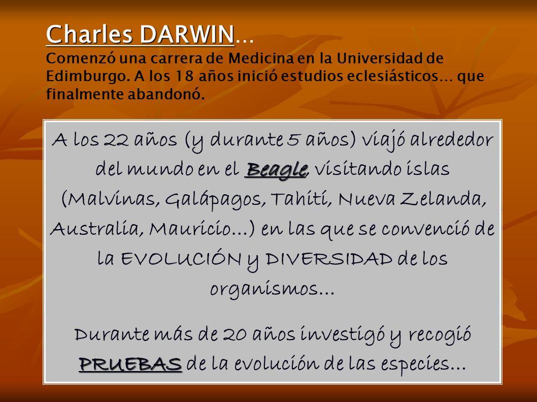 Beagle A los 22 años (y durante 5 años) viajó alrededor del mundo en el Beagle, visitando islas (Malvinas, Galápagos, Tahití, Nueva Zelanda, Australia, Mauricio…) en las que se convenció de la EVOLUCIÓN y DIVERSIDAD de los organismos… PRUEBAS Durante más de 20 años investigó y recogió PRUEBAS de la evolución de las especies… Charles DARWIN Charles DARWIN … Comenzó una carrera de Medicina en la Universidad de Edimburgo.