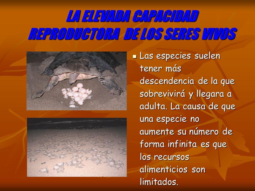 LA ELEVADA CAPACIDAD REPRODUCTORA DE LOS SERES VIVOS Las especies suelen tener más descendencia de la que sobrevivirá y llegara a adulta.