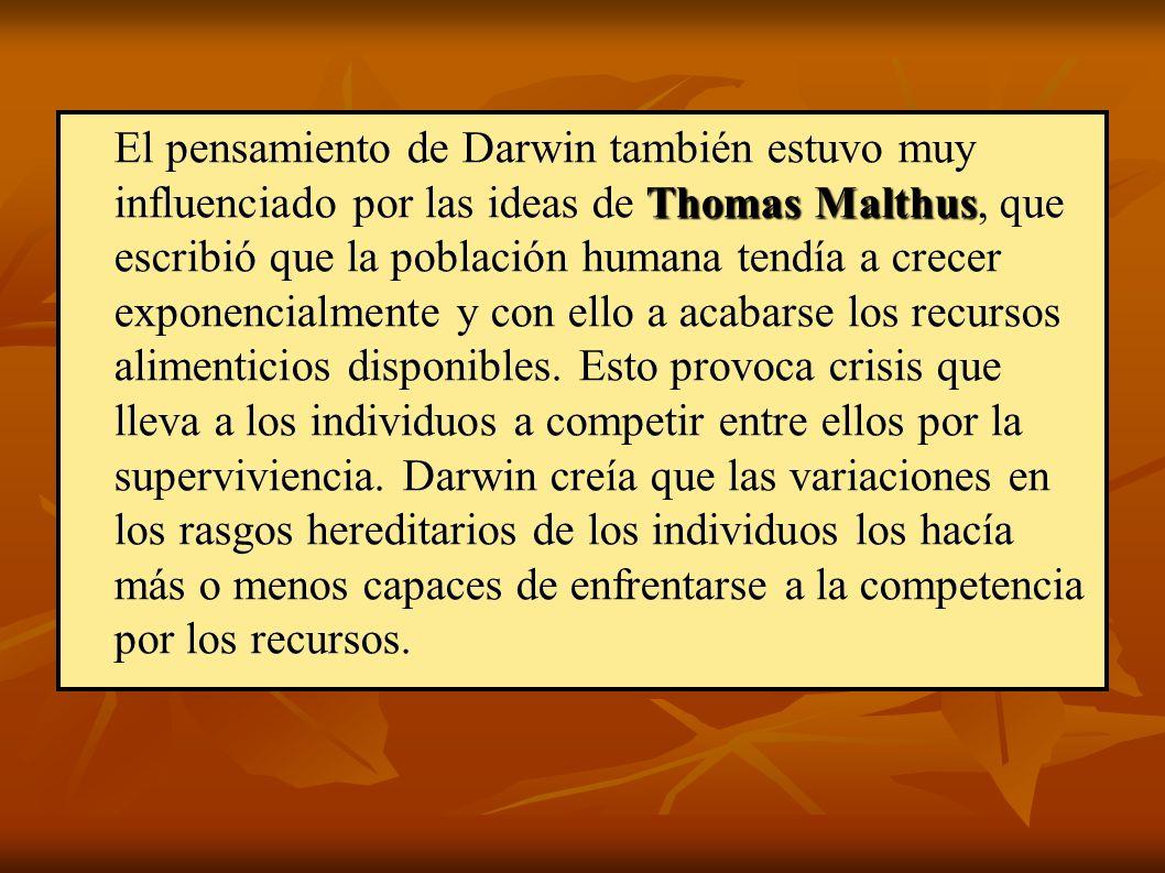 Thomas Malthus El pensamiento de Darwin también estuvo muy influenciado por las ideas de Thomas Malthus, que escribió que la población humana tendía a crecer exponencialmente y con ello a acabarse los recursos alimenticios disponibles.