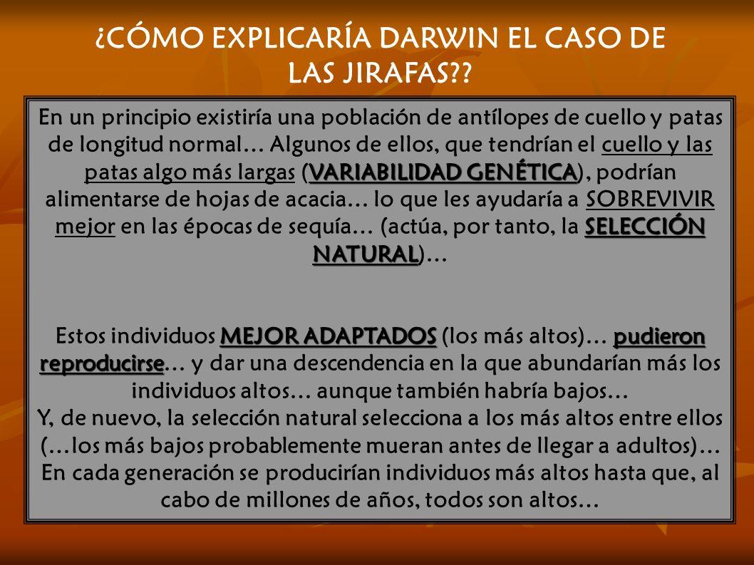 ¿CÓMO EXPLICARÍA DARWIN EL CASO DE LAS JIRAFAS?.