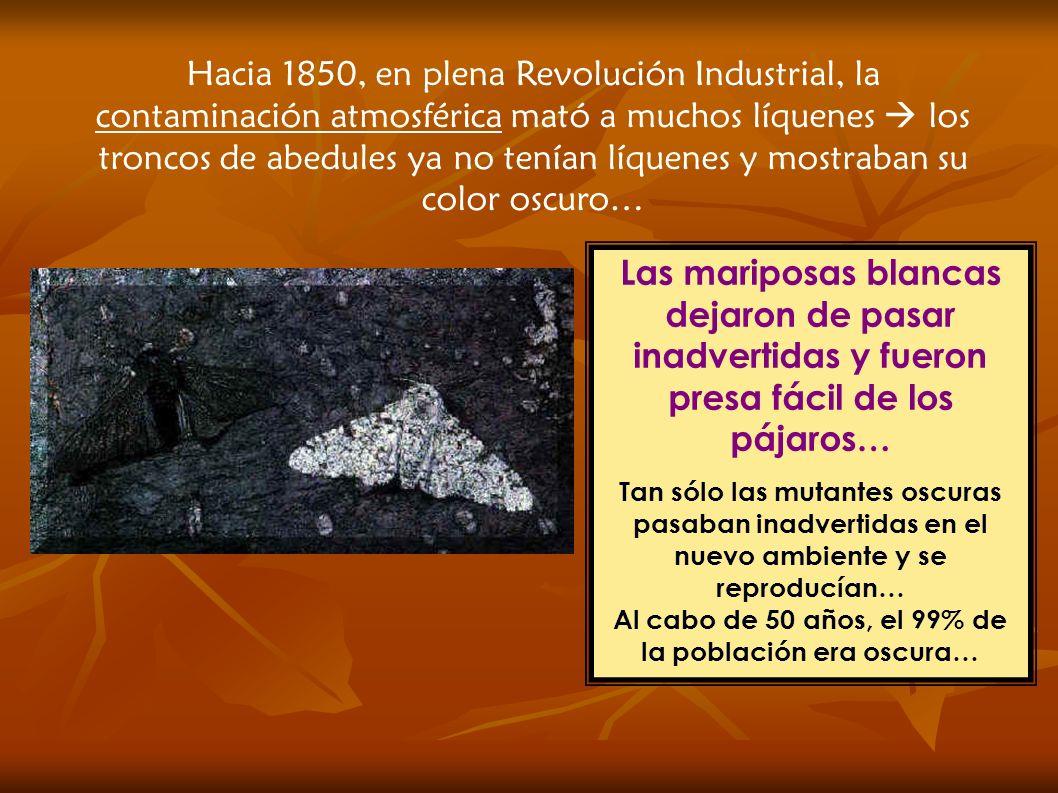 Hacia 1850, en plena Revolución Industrial, la contaminación atmosférica mató a muchos líquenes los troncos de abedules ya no tenían líquenes y mostraban su color oscuro… Las mariposas blancas dejaron de pasar inadvertidas y fueron presa fácil de los pájaros… Tan sólo las mutantes oscuras pasaban inadvertidas en el nuevo ambiente y se reproducían… Al cabo de 50 años, el 99% de la población era oscura…
