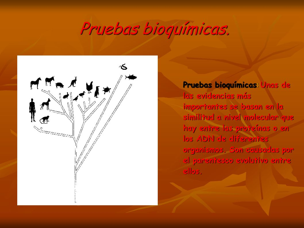 Pruebas bioquímicas.Pruebas bioquímicas.