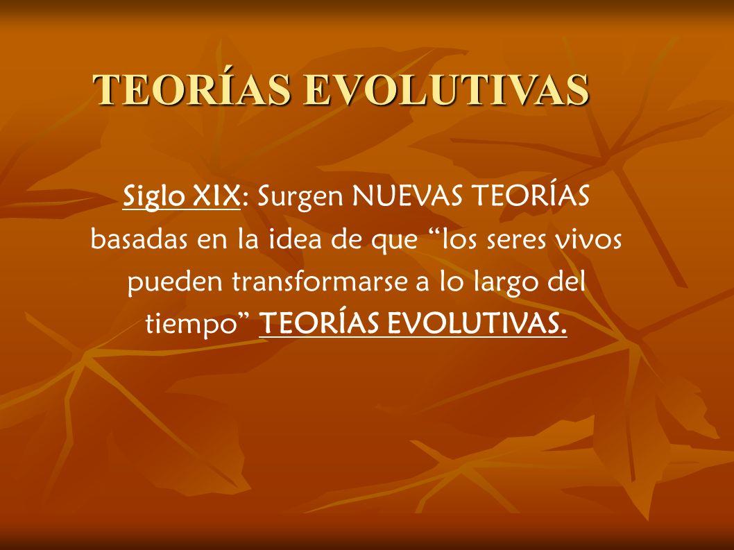 TEORÍAS EVOLUTIVAS Siglo XIX: Surgen NUEVAS TEORÍAS basadas en la idea de que los seres vivos pueden transformarse a lo largo del tiempo TEORÍAS EVOLUTIVAS.