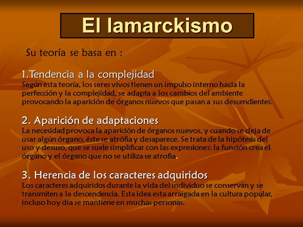 La teoría de Lamarck tuvo gran aceptación… Pero se EQUIVOCÓ al suponer que las características adquiridas son heredables : - Son características producidas por el ambiente, NO POR LOS GENES NO PUEDEN HEREDARSE!.
