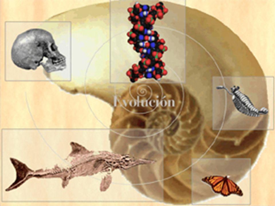 Los cambios que el individuo experimenta mientras crece y se desarrolla no son cambios evolutivos.