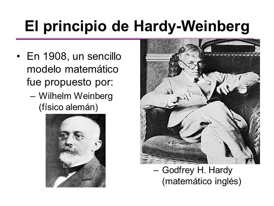 El principio de Hardy-Weinberg En 1908, un sencillo modelo matemático fue propuesto por: –Wilhelm Weinberg (físico alemán) –Godfrey H. Hardy (matemáti