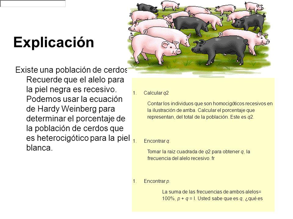 Explicación Existe una población de cerdos. Recuerde que el alelo para la piel negra es recesivo. Podemos usar la ecuación de Hardy Weinberg para dete