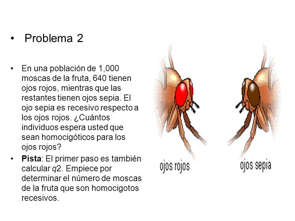 Problema 2 En una población de 1,000 moscas de la fruta, 640 tienen ojos rojos, mientras que las restantes tienen ojos sepia. El ojo sepia es recesivo