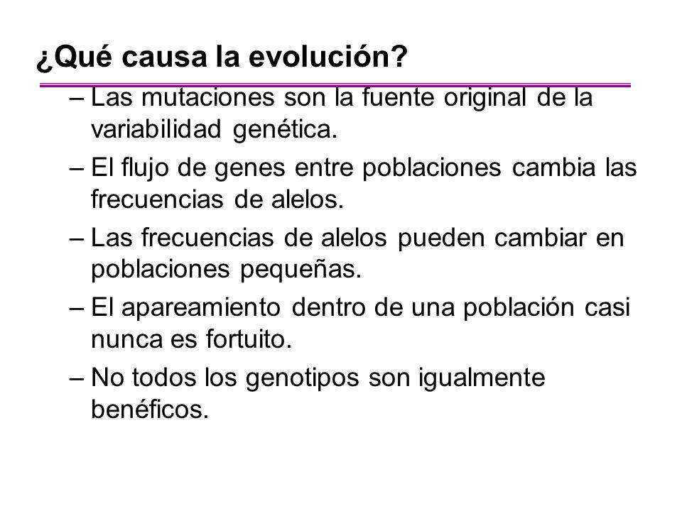 ¿Qué causa la evolución? –Las mutaciones son la fuente original de la variabilidad genética. –El flujo de genes entre poblaciones cambia las frecuenci