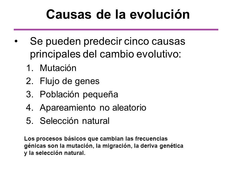 Causas de la evolución Se pueden predecir cinco causas principales del cambio evolutivo: 1.Mutación 2.Flujo de genes 3.Población pequeña 4.Apareamient