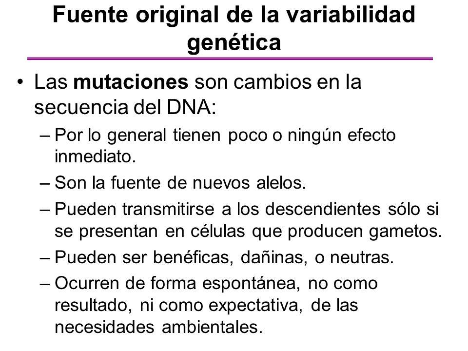 Fuente original de la variabilidad genética Las mutaciones son cambios en la secuencia del DNA: –Por lo general tienen poco o ningún efecto inmediato.