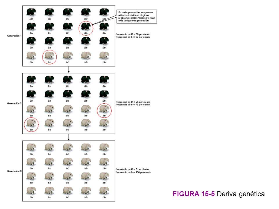 FIGURA 15-5 Deriva genética