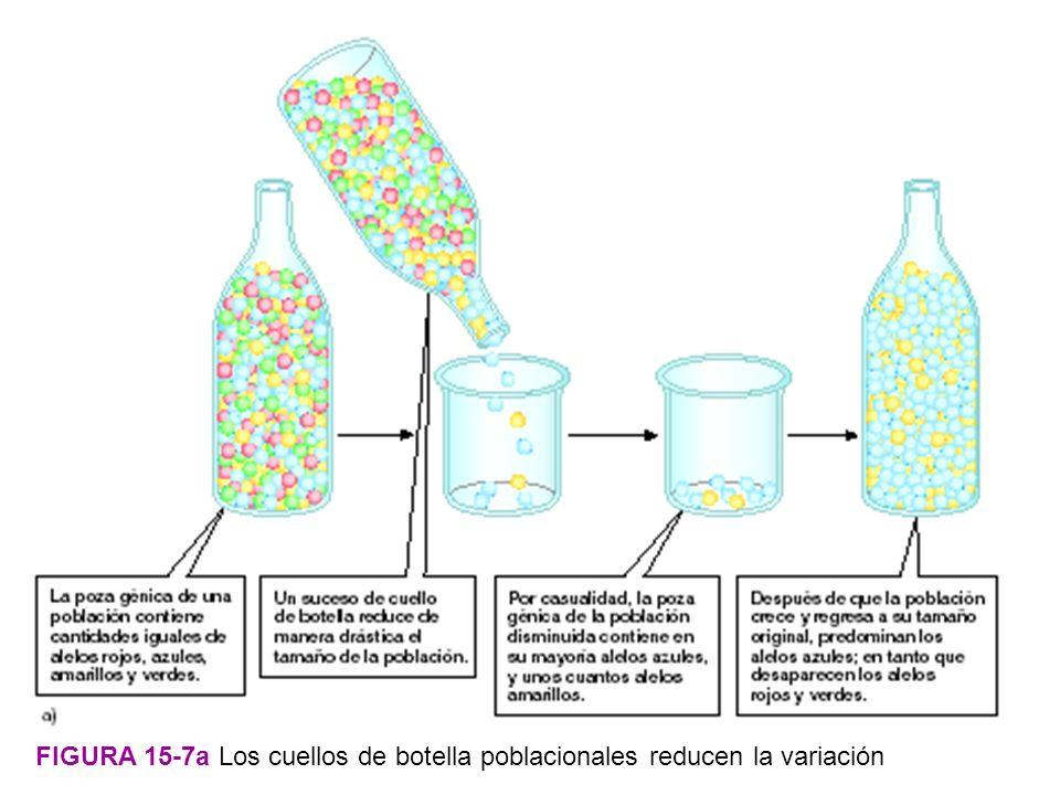 FIGURA 15-7a Los cuellos de botella poblacionales reducen la variación