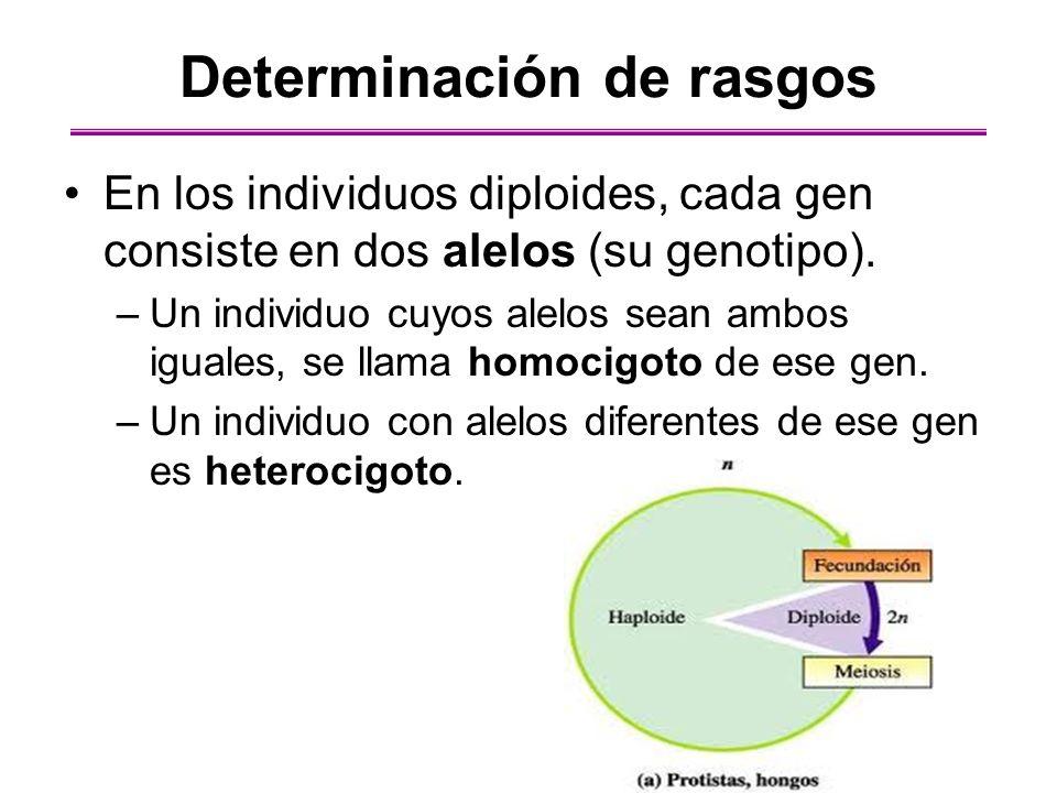 El apareamiento casi nunca es fortuito El apareamiento no aleatorio puede cambiar la distribución de genotipos en la población.