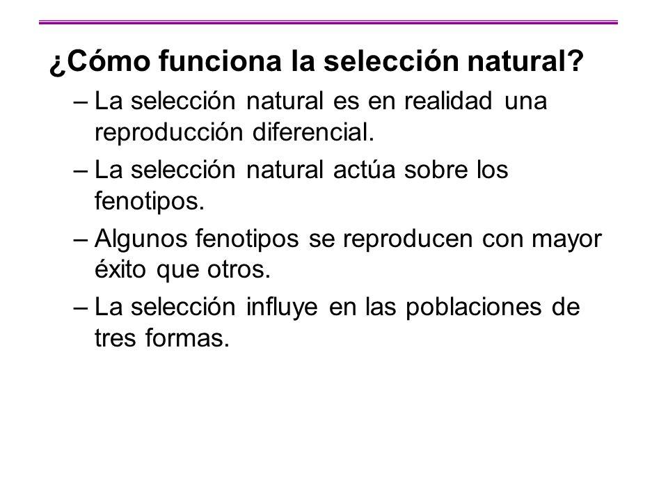 ¿Cómo funciona la selección natural? –La selección natural es en realidad una reproducción diferencial. –La selección natural actúa sobre los fenotipo