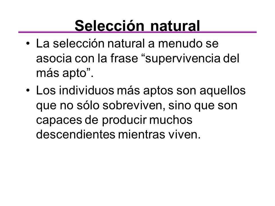 Selección natural La selección natural a menudo se asocia con la frase supervivencia del más apto. Los individuos más aptos son aquellos que no sólo s