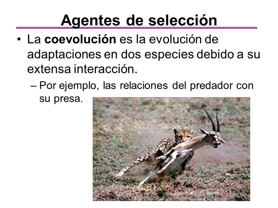 La coevolución es la evolución de adaptaciones en dos especies debido a su extensa interacción. –Por ejemplo, las relaciones del predador con su presa