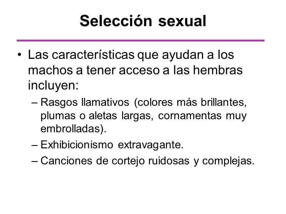Las características que ayudan a los machos a tener acceso a las hembras incluyen: –Rasgos llamativos (colores más brillantes, plumas o aletas largas,