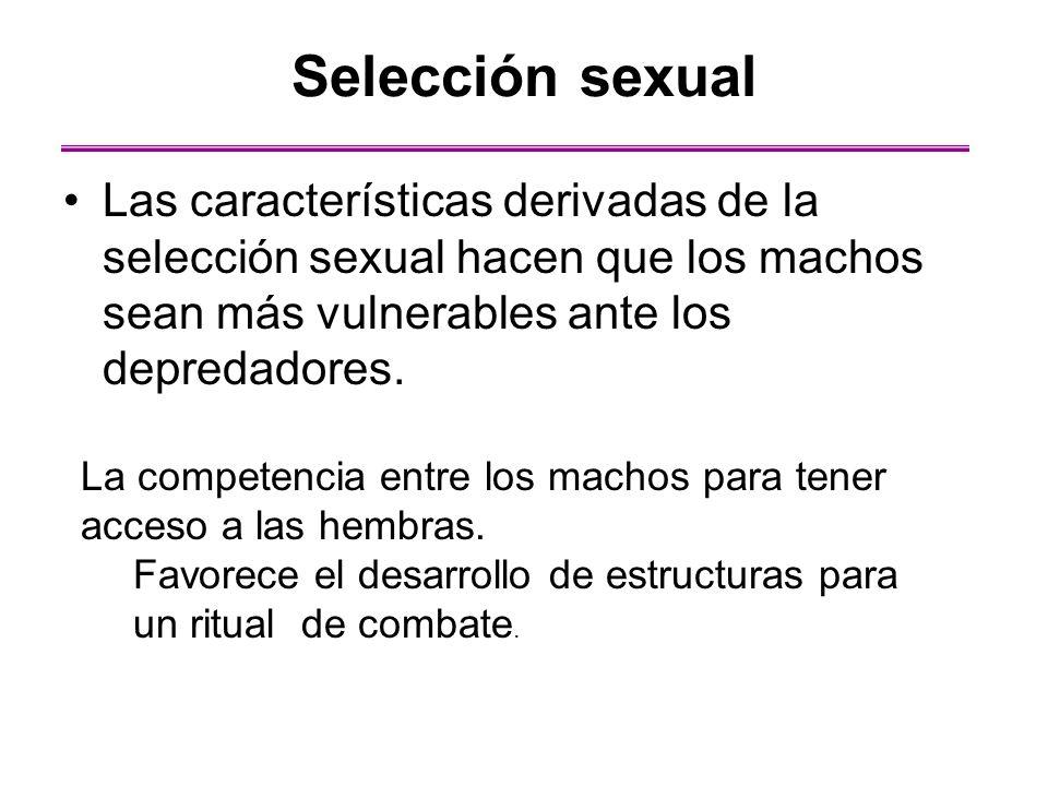 Las características derivadas de la selección sexual hacen que los machos sean más vulnerables ante los depredadores. Selección sexual La competencia