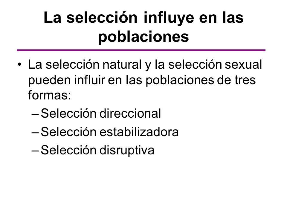 La selección influye en las poblaciones La selección natural y la selección sexual pueden influir en las poblaciones de tres formas: –Selección direcc