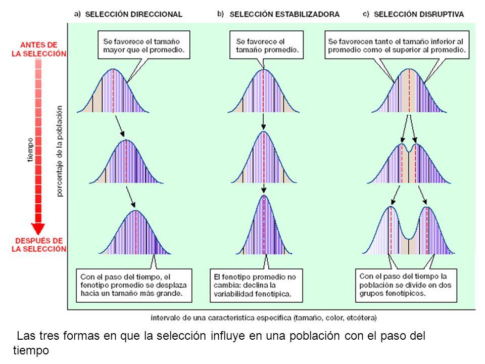 Las tres formas en que la selección influye en una población con el paso del tiempo