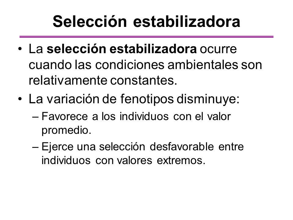 Selección estabilizadora La selección estabilizadora ocurre cuando las condiciones ambientales son relativamente constantes. La variación de fenotipos