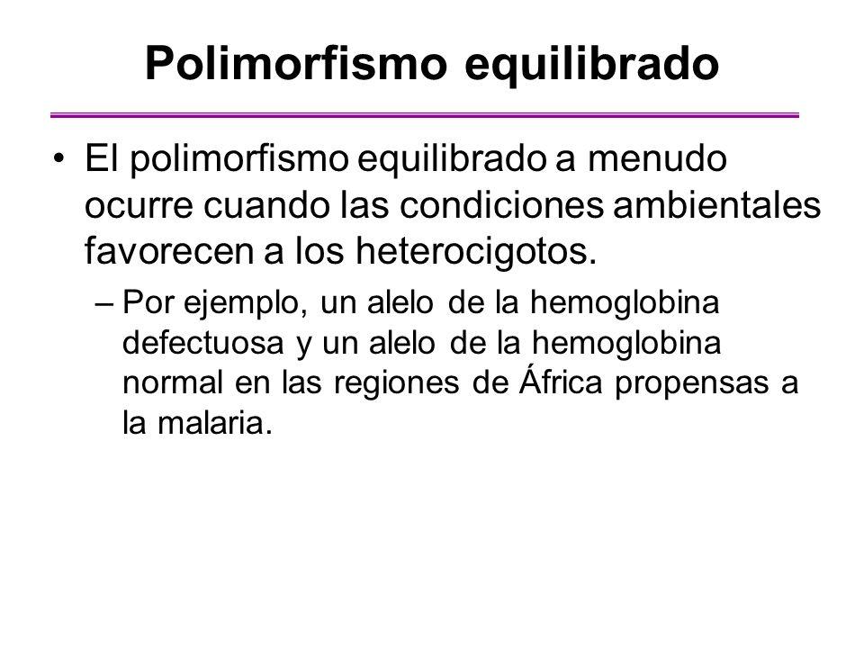 El polimorfismo equilibrado a menudo ocurre cuando las condiciones ambientales favorecen a los heterocigotos. –Por ejemplo, un alelo de la hemoglobina