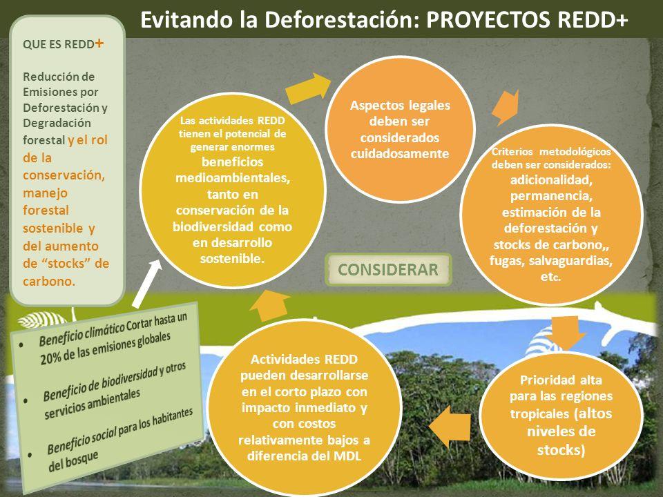 Evitando la Deforestación: PROYECTOS REDD+ QUE ES REDD + Reducción de Emisiones por Deforestación y Degradación forestal y el rol de la conservación, manejo forestal sostenible y del aumento de stocks de carbono.