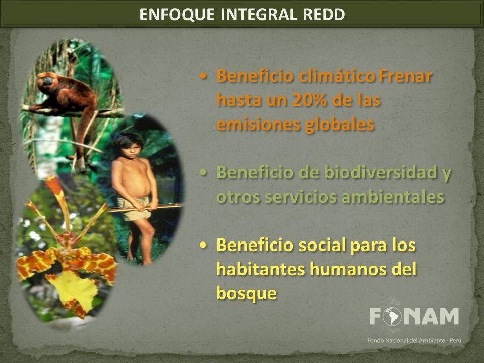 ENFOQUE INTEGRAL REDD Beneficio climático Frenar hasta un 20% de las emisiones globales Beneficio de biodiversidad y otros servicios ambientales Beneficio social para los habitantes humanos del bosque Beneficio climático Frenar hasta un 20% de las emisiones globales Beneficio de biodiversidad y otros servicios ambientales Beneficio social para los habitantes humanos del bosque