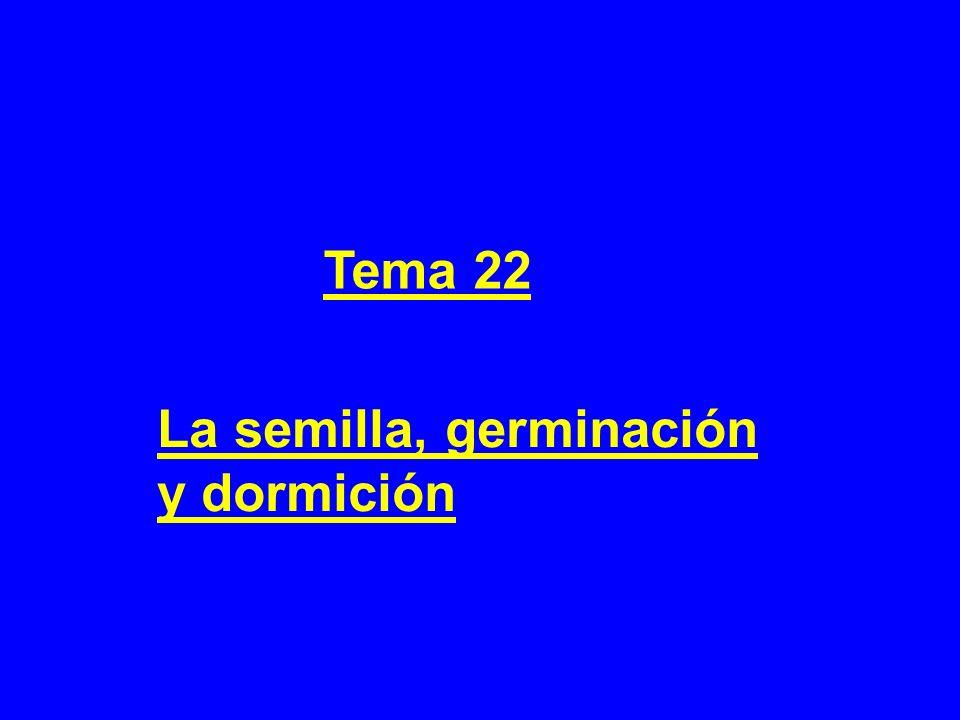 Tema 22 La semilla, germinación y dormición