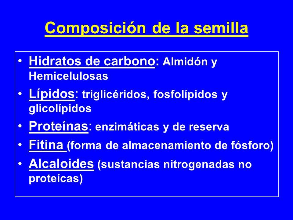 Composición de la semilla Hidratos de carbono: Almidón y Hemicelulosas Lípidos: triglicéridos, fosfolípidos y glicolípidos Proteínas: enzimáticas y de