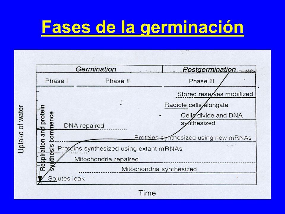 Fases de la germinación