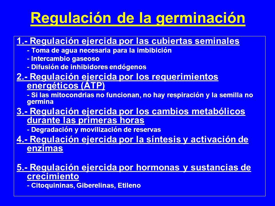 Regulación de la germinación 1.- Regulación ejercida por las cubiertas seminales - Toma de agua necesaria para la imbibición - Intercambio gaseoso - D